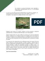 2- Metamorfosis de Los Insectos