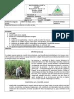 8 agricolas 9-10segundo periodo, 1-2 tercer periodo.pdf