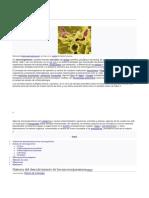 MICROORGANISMOS EN LA TIERRA