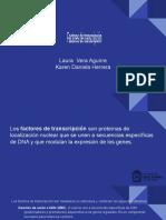 Factores de transcripcion