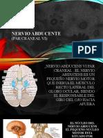 Nervio abducente