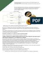 _acti idad 1  Medio Tercera-8046 (1)