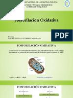 T 17 Fosforilacion Oxidativa.pdf