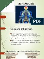 sist. Nervioso P. Point (2)