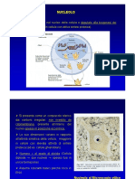 Citologia-nucleolo
