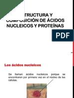 Acidos_nucleicos_5U