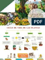CICLO DE VIDA DE LAS PLANTAS Y LOS animales final