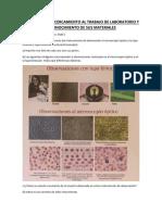 Copia de ACTIVIDAD PRACTICO BIOLOGIA.pdf