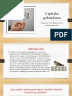 Capitales golondrinas.pptx