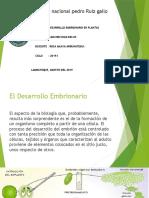 DESARROLLO EMBRIONARIO SANCHEZ DIAZ