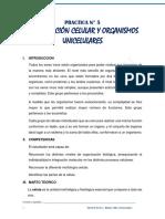 PROTOCOLO  5 (1).pdf
