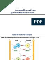hybridation moléculaire _acides nucléiques
