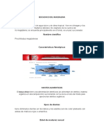 BOCACHICO DEL MAGDALENA.docx