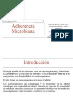 Presentacion Microbiologia 1