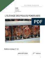 aviculture  POULES PONDEUSE 3