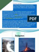 trabajodehistoria-110505160759-phpapp02.pptx