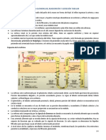 15-09-2020 Filtracion glomerular.docx (1).pdf
