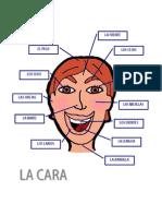 VOCABULARIO DE LA CARA