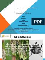 425410129-Tarea-1-Origen-y-Reconocimiento-Entomologia.pptx