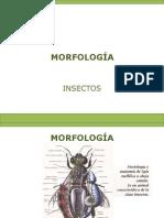 1-2-morfología