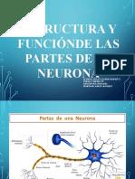 trabajo Biología Neurona.pptx
