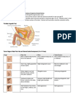 Male Genitals and Inguinal Area.docx