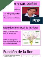 LA FLOR Y SUS PARTES