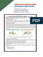 taller de respiracioon plantas y animales.pdf