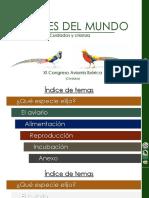 ponenciaXIaviornis