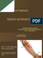 ANTEBRAZO - REGIÓN ANTERO-EXTERNA