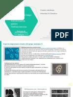 S8-FormatoPresentacionPhylumGenero (1).pptx