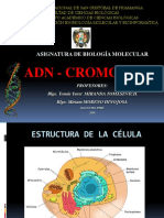 ADN - CROMOSOMA 2020-I -parte1.pdf