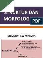 Struktur dan Morfologi Sel