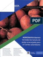 Producción de batata aurora con criterios agroecologicos