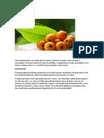 Fruto perteneciente a la familia de las rosáceas.docx