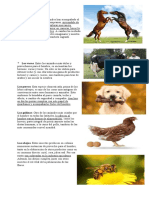 LOS BENEFICIO DE LOS ANIMALES