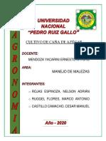 CULTIVO CAÑA DE AZUCAR.pdf
