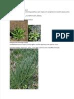 vdocuments.site_plante-comestibile-romania