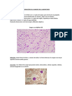 laboratorio sangre y mitosis