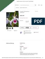 Anggrek Dendrobium anosmum