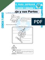 Ficha-La-Hoja-y-sus-Partes-para-Cuarto-de-Primaria