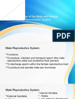 3.-Anatomy-of-the-Male-and-Female-Reproductive-System