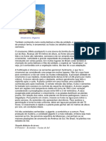cinamomo.pdf