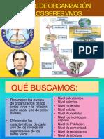 NIVELES DE ORGANIZACIÓN SDLV