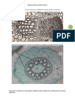 BiolPlantas-TallerExa1 (1).docx
