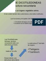 TALLO DE DICOTILEDONEAS