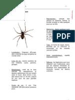 Araignées quotidien p40-47