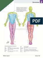 atlas_de_anatomia_humana_netter_6ed_medilibros.com_94