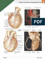atlas_de_anatomia_humana_netter_6ed_medilibros.com_123