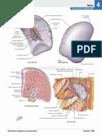 atlas_de_anatomia_humana_netter_6ed_medilibros.com_159